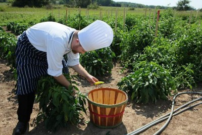 Chef Justin Johnson picks banana peppers in the garden at UW Health Partners Watertown Regional Medical Center. (Photo from the Milwaukee Journal-Sentinel)