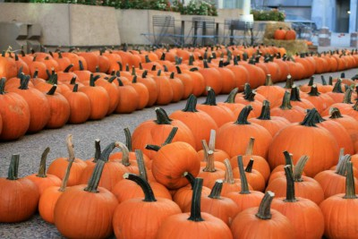 Sekapp Orchard brought 800 pumpkins to the plaza in downtown Rochester.